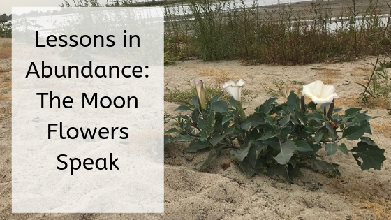It might seem strange: The moonblossoms teach us about abundance and prosperity as they bloom by the Kern River.