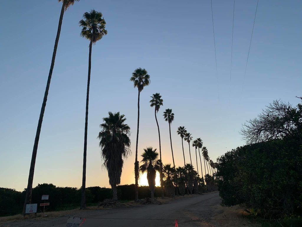 A row of palm trees at sunrise is one of the haiku photos I have taken during 2020. Poetry and dailiness has made a big difference for me with Micro Goals.