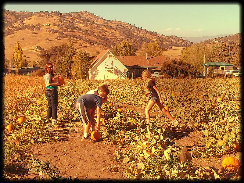 Playing in the pumpkin patches in Tehachapi is a family favorite. Here, four children find the perfect pumpkin.