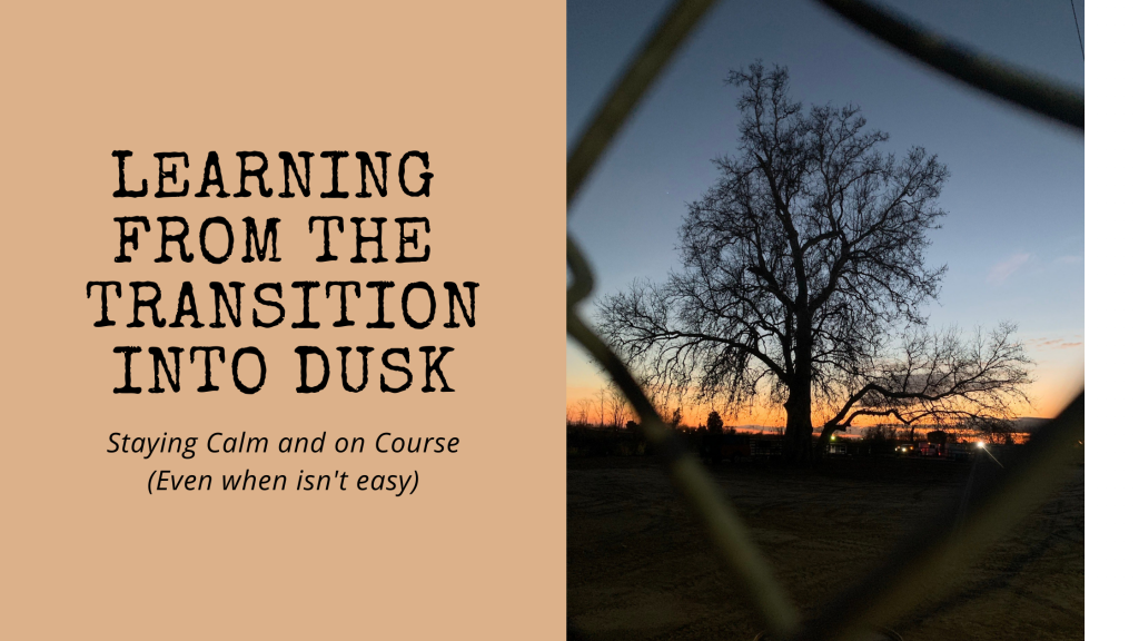 """A tall cottonwood behind a chain link fence at sunset. Title is """"Learning from Transition Into Dusk. Staying Calm even when it isn't easy)"""